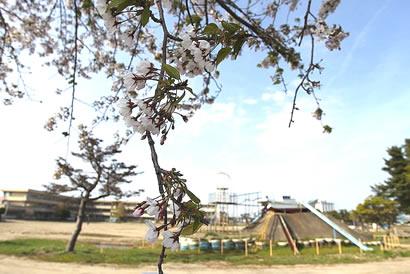 yurisyo1