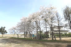yurisyo2